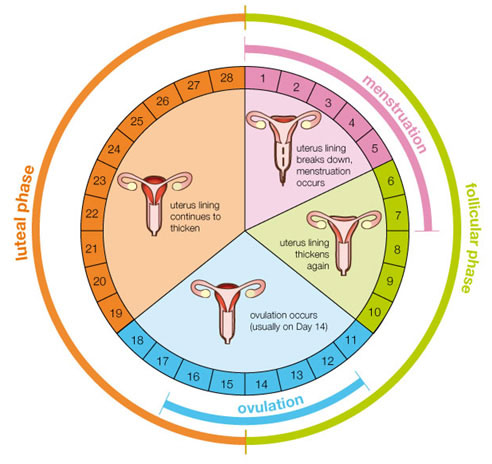 Menstrual Health and Cycle Awareness